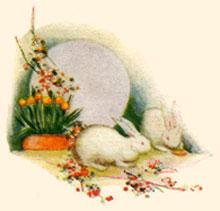 bunny-rabbits-6