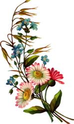 daisy-pink-bouquet