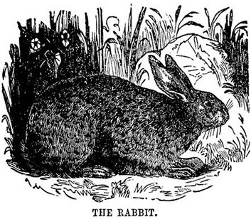 rabbits-07