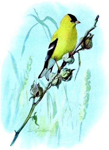 bird-images-04